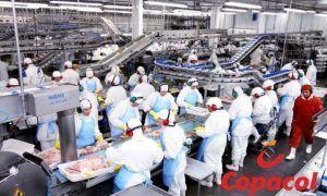 Copacol empregos vagas industria