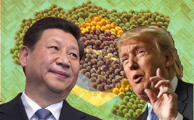 Soja Brasil China e Estados Unidos soja comercial