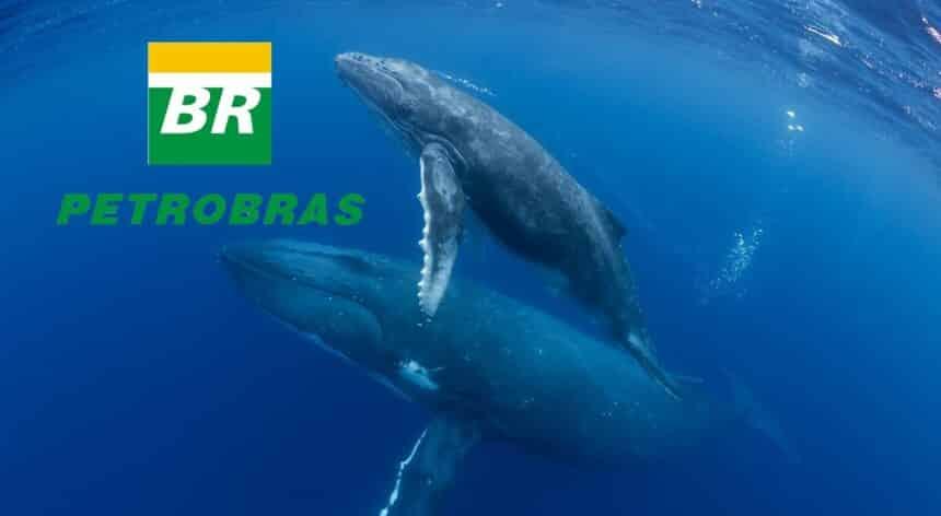 Petrobras baleias golfinhos projeto