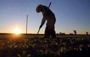 Mais de 80 mil vagas de emprego foram abertas pelo setor agropecuário no Brasil neste ano de 2020