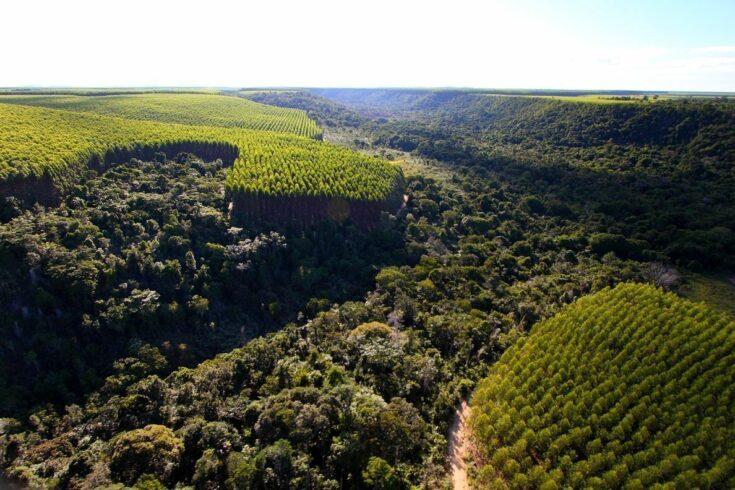 empregos, Bahia, setor florestal, PIB