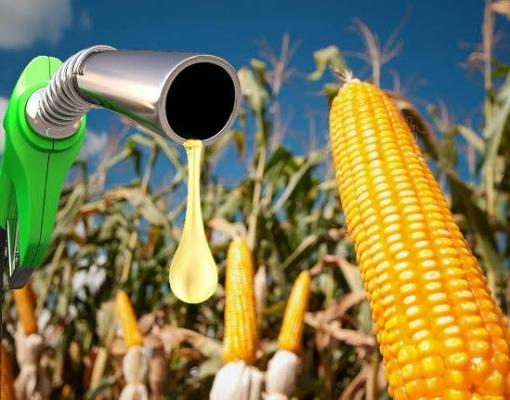 Mato Grosso do Sul, etanol, milho, usina