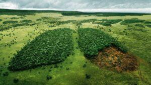 Amazônia - economia