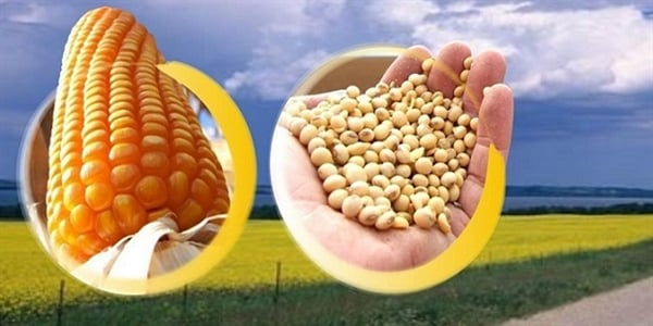 milho - soja - importações