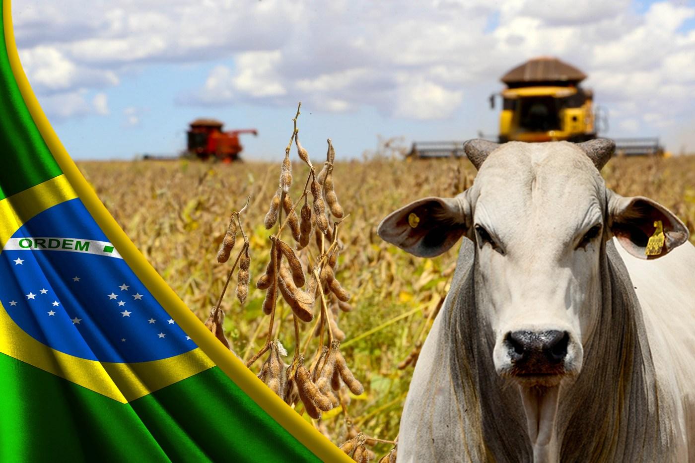 Agropecuário, produção