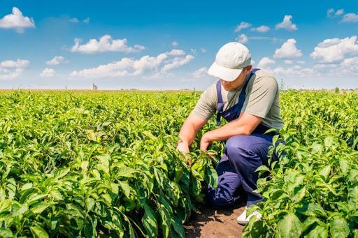 Empregos, agronegócio, oportunidades de emprego
