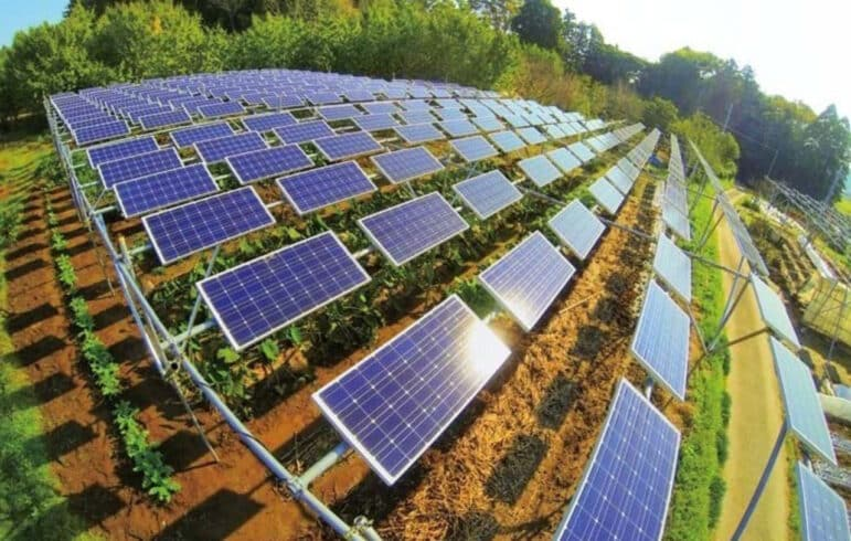 BRF -BB - energia solar - agropecuária