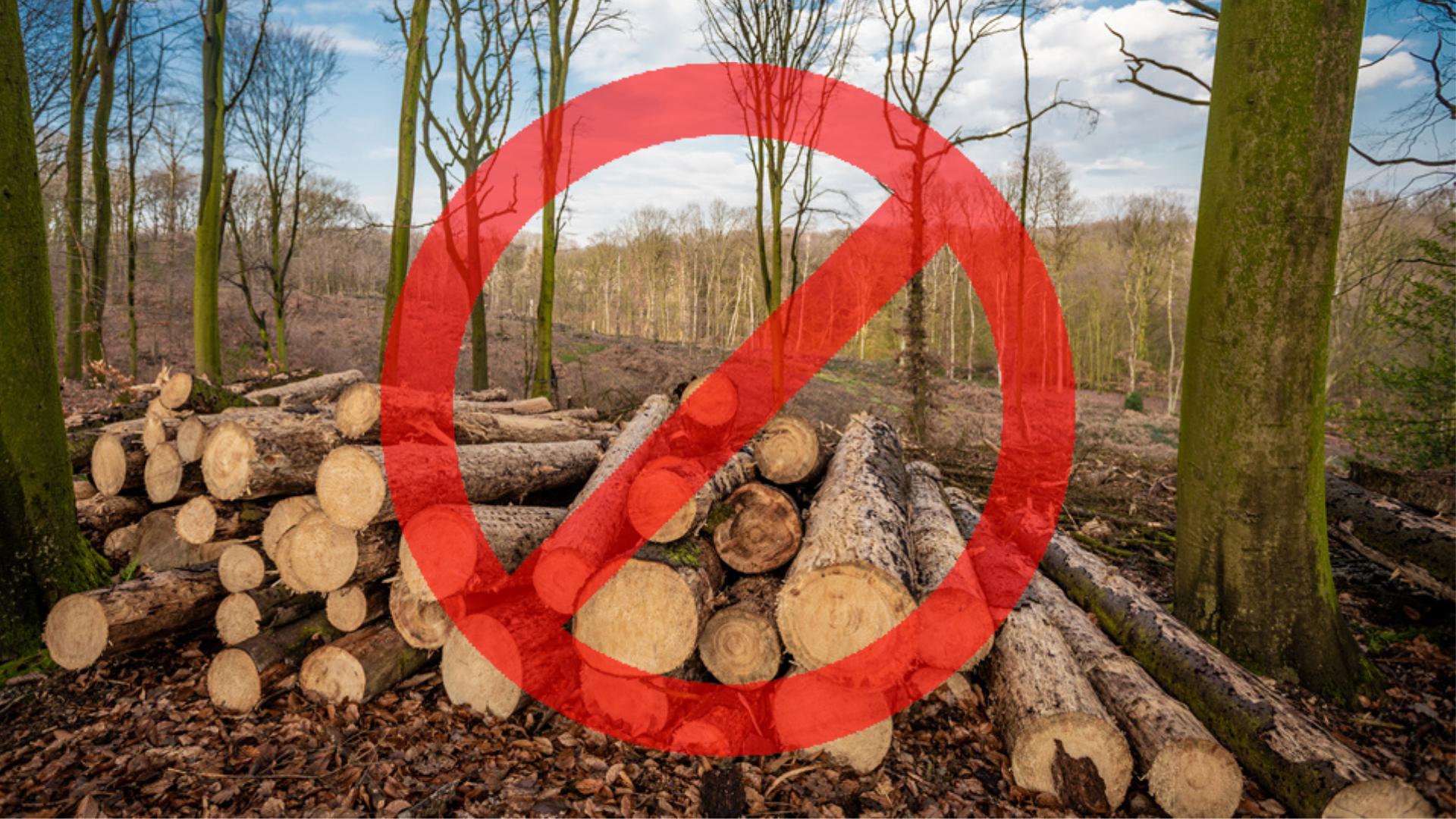 Governo Federal – emissões de carbono – desmatamento