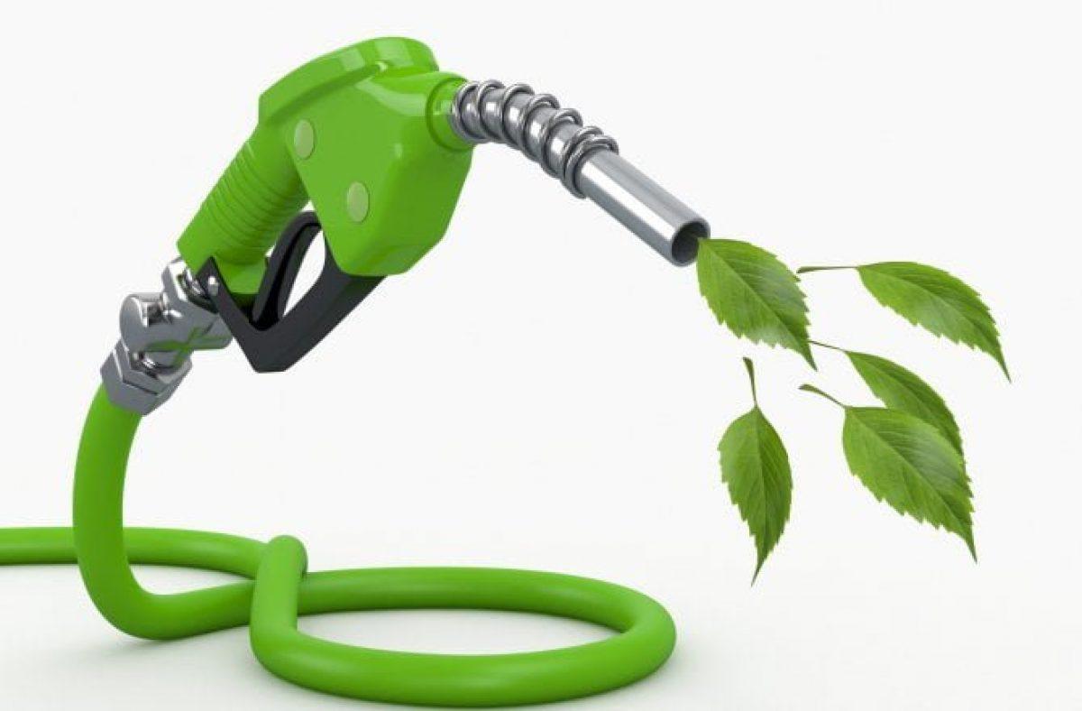 Biocombustível - plantas - cientistas - consumidor