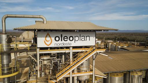 Usina – biodiesel – Pará – empregos