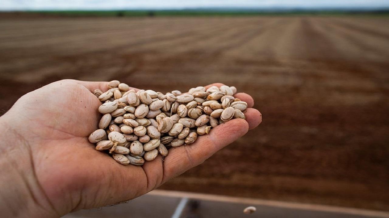 Arroz - Feijão - crise hídrica - agronegócio